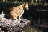 IMG_0178 Cat nap