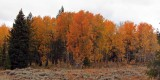 IMG_0076 Fall Colors Beartooth Highway