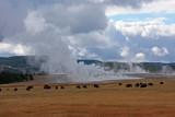 IMG_0016 Buffalo and steam