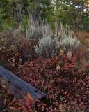 IMG_0055 Fall foliage
