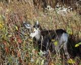 IMG_0136 Mule deer fawn