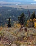 IMG_0194 Buck on Signal Mountain