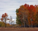 IMG_0068 Fall Colors