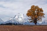 IMG_0077 Fall tree