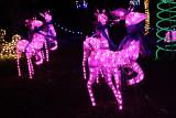 IMG_0552 Pink Reindeer.jpg