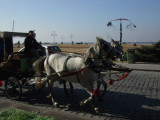 Carriage rides were available along the waterfront