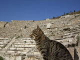 Odean Cat in Ephesus