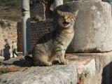 Ephesus latrine cat