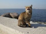 Izmir harbor cat, personality 3