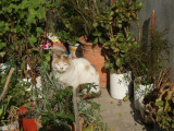 Village cat with flower pots