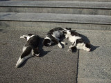 And more museum cats...Dominoes!