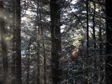 Snow flurry in Barnaslingan Wood