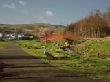 Heron in Seán Walsh Park