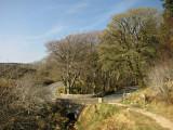 Cruagh Wood