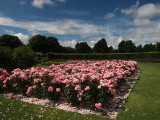 Rose Garden, St. Anne's Park