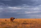 910-elephant dark sky-.jpg