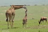 Sweet mommie baby kiss