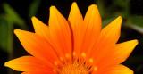 Flower Rise
