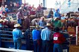 Brazoria County Fair roper at the chute