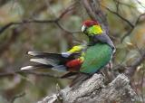 Birds from Perth-Albany