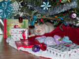 Milo Under the Tree 1.jpg