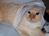 Milo Wrapped Up.jpg