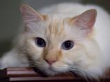 Milo the Cat.jpg