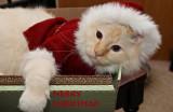 Santa Claws Milo 4_4 screen.jpg