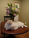 Milo with My Flowers.jpg