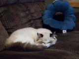 Skye napping.jpg