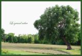 The big tree...
