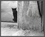 Un chaton noir...un balai