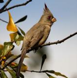 Upper Texas Coast winter birds