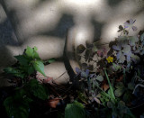 Weeds  and shadows