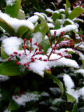 DSCF2983 First snowfall