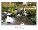 Laceleaf Pond.jpg