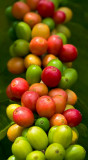 Kona coffee cherries III