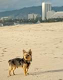 Leo enjoying the view at Santa Monica Beach