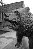 The UCLA bear mascot