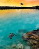 Late swim at Kiholo Bay