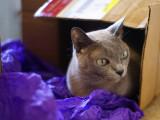 feline gift