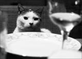 anticipate supper