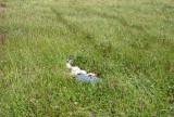 Falling asleep in the tall grass