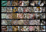Collage of 40 fish photos.