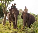 Tourist on elephant