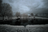 Iris City Gardens, Primm Springs, Tennessee  USA