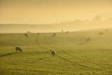 Washburn Mist  10_d70_DSC_0611