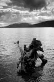 Loch Lomond  11_DSC_5183