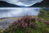 Loch Lomond  11_DSC_5413