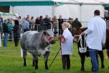 Nidderdale Show 2011  11_DSC_7435